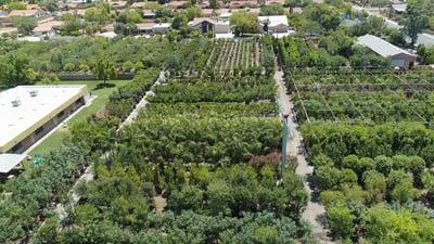large nursery growyard