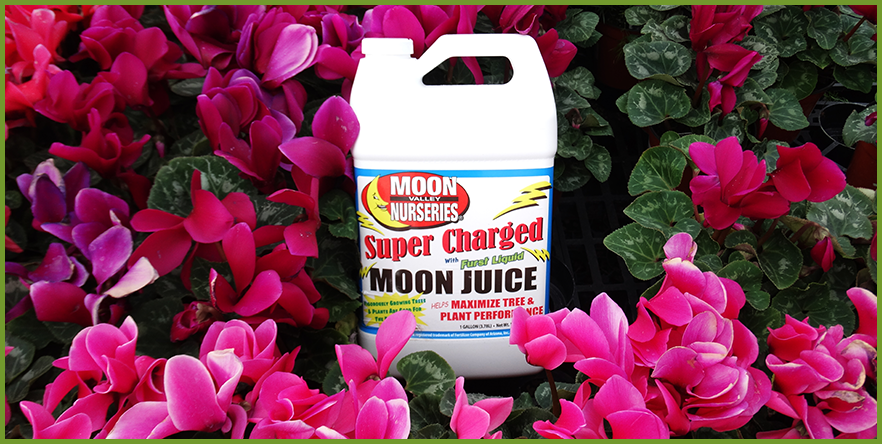 Moon-Juice-4.png
