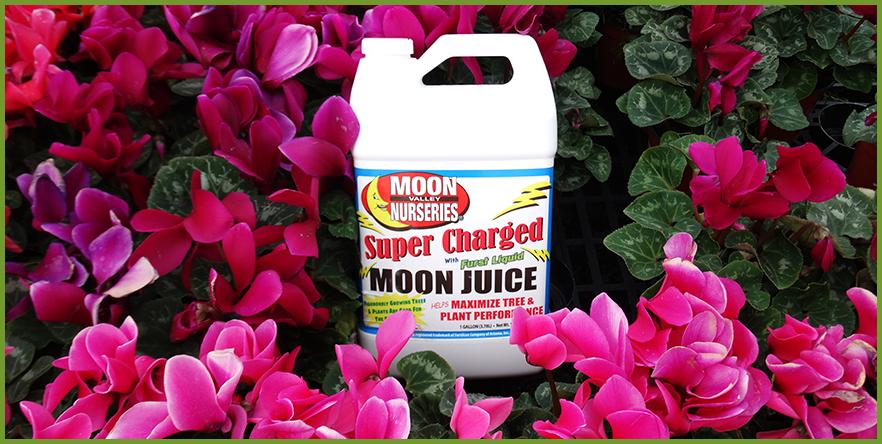 Moon_Juice