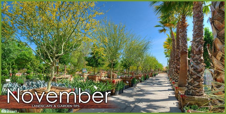 November Landscape Garden Tip.jpg