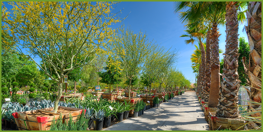 Moon Valley Nurseries Started With One Small Location In A Neighborhood Just North Of Downtown Phoenix Known As From There We Have Grown Into