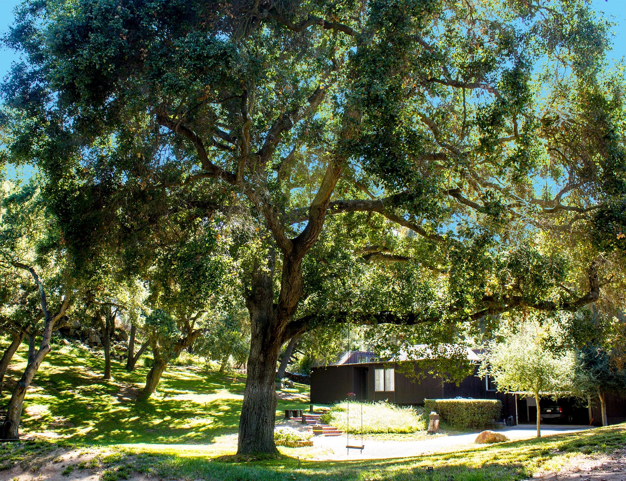 <img src=&quot;image file&quot; alt=&quot;buy specimen trees&quot;>
