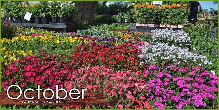 October_Landscape_Garden_Tip.jpg