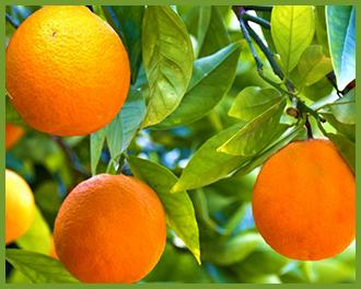 Orange-1.png