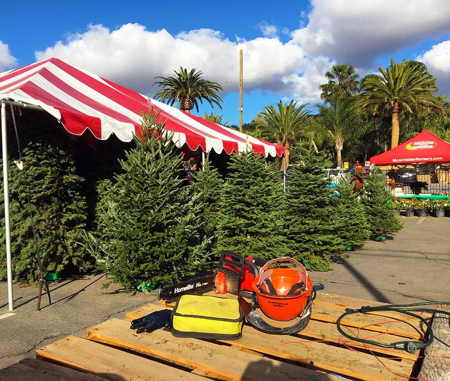 Why Christmas Trees: Tips & Advice Blog