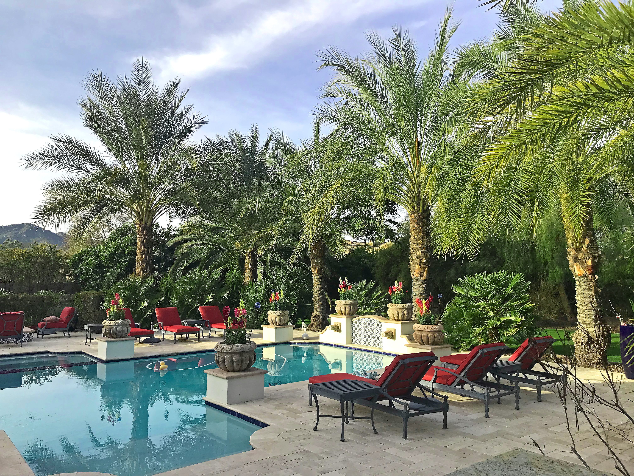 Palm Paradise-2