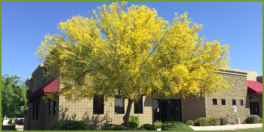 5 best yellow flowering trees yellow flowering trees can add plenty of interest to our landscape we can add some leafy eye candy to our space that is sure to attract all the right mightylinksfo