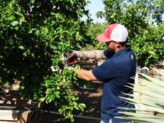 Pruning Pics (1)