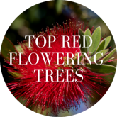 Top Red Flowering Trees