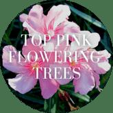 Top Pink Flowering Trees