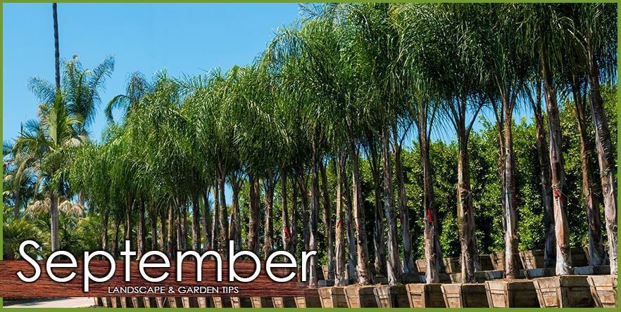 Sept_Landscape_Garden_Tip.jpg