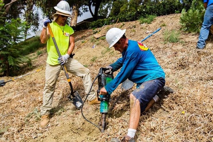 professional_tree_planting