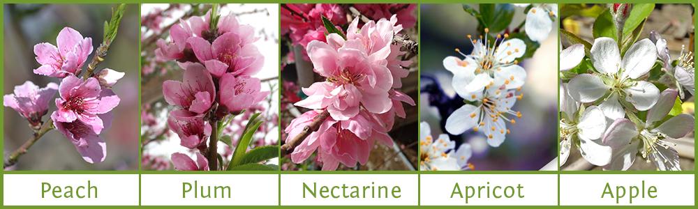 Sont-Fruit-Flowers.png