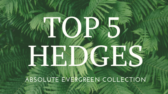 TOP 5 HEDGES