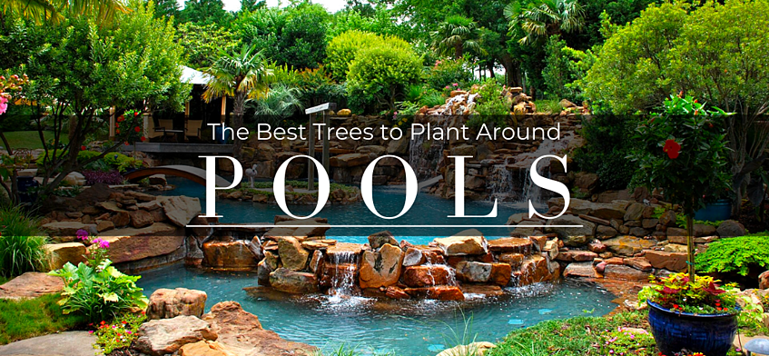 The Best Trees to Plant Around Pools