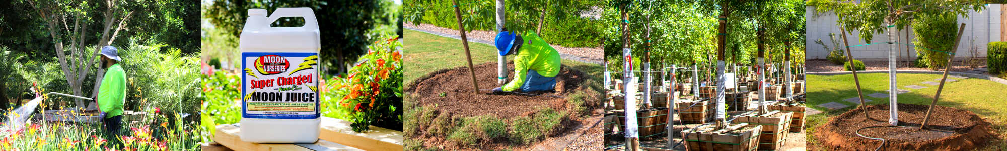 watering, fertilizers, nutrients, tree wrap, double tree staking, and mulch header