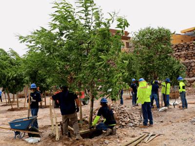 Moon valley nurseries planting Tipu trees at Gene Simmons house
