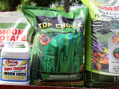 Winter ryegrass seed and starter kit