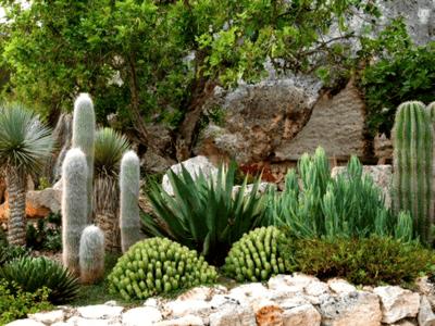 Variety of Cacti