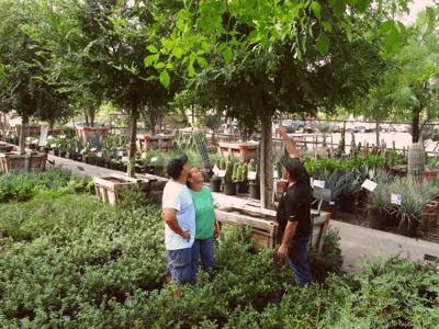 Moon Valley Nurseries Professional Landscape Designer