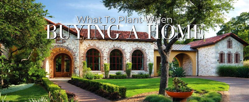 What to Plant When Buying a New Home