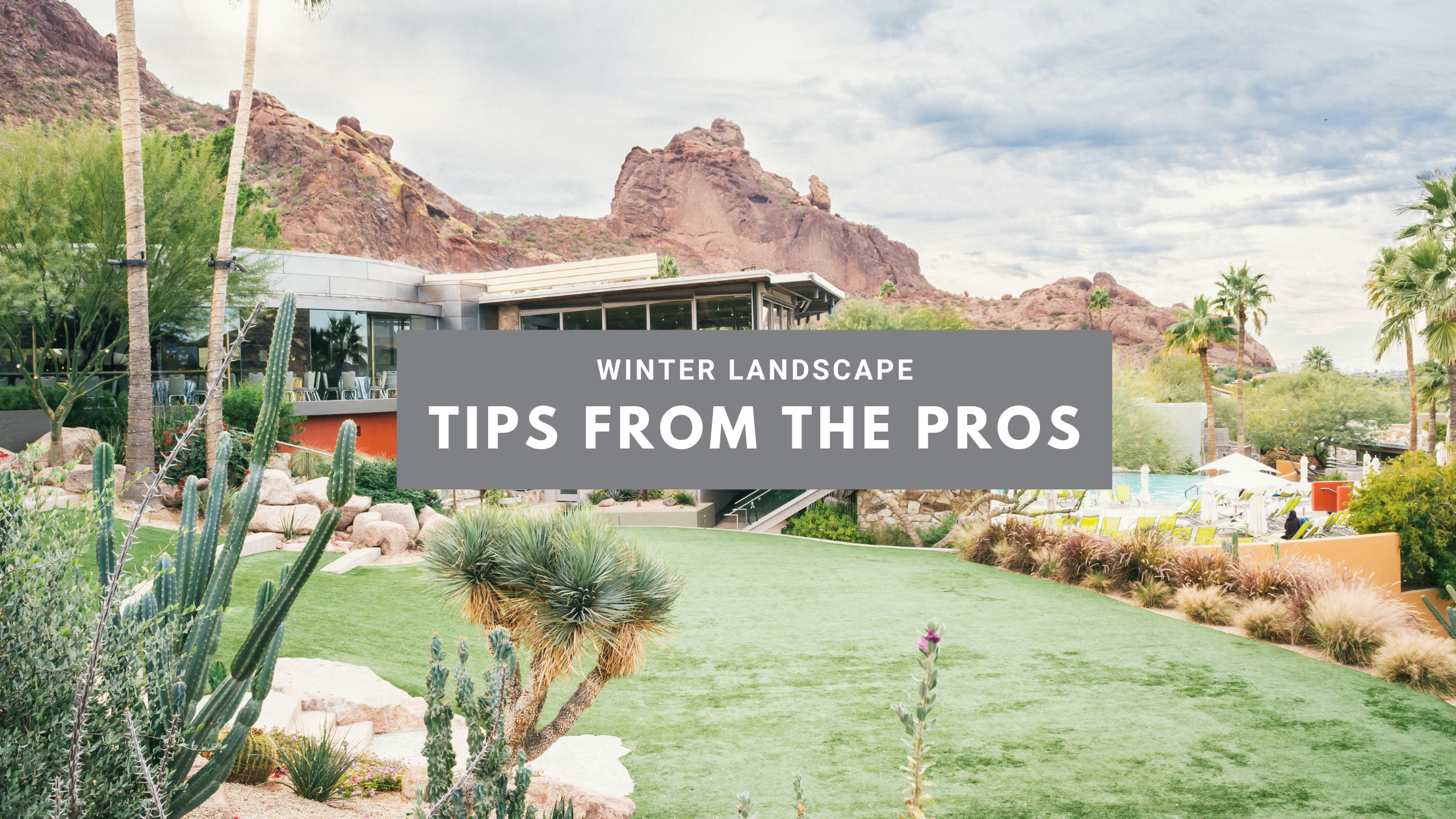 Winter Landscape Tips From the Pros AZ