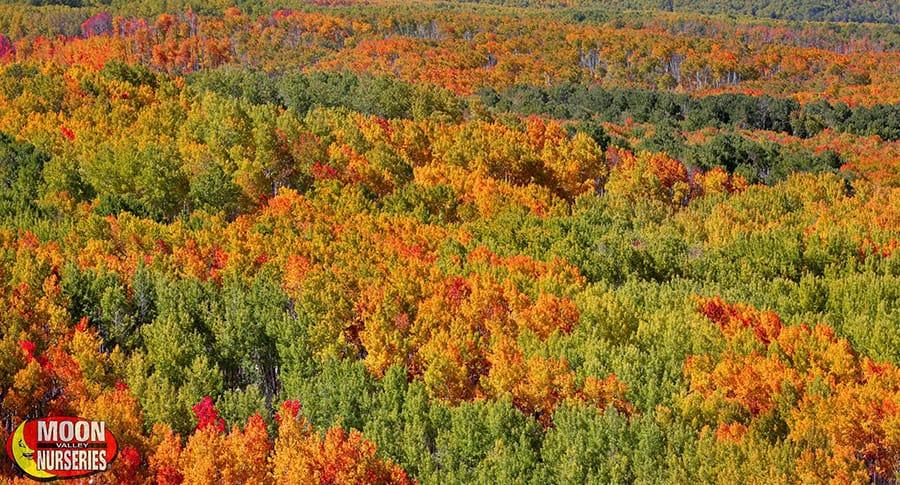 blog_main_pic_fall_landscape