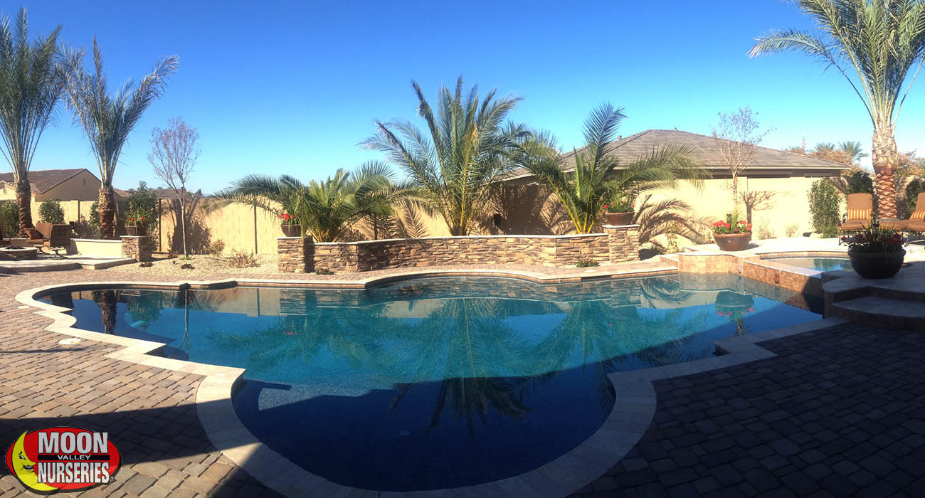 blog_main_pic_landscaping_around_pools