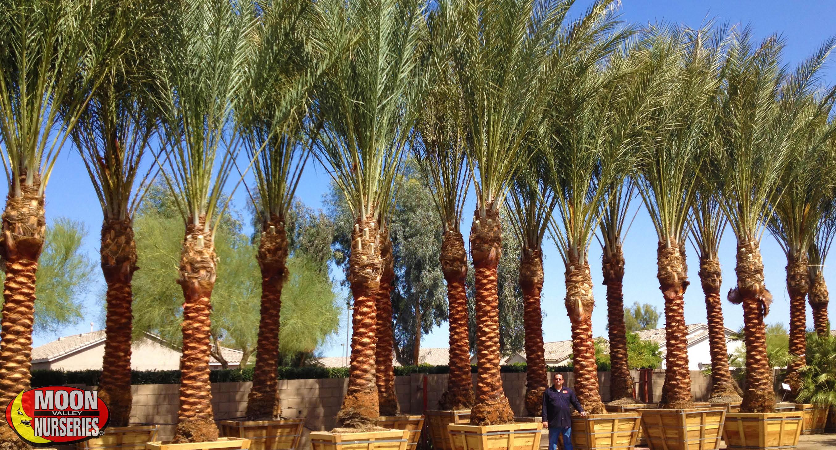 blog_main_pic_top_5_palms