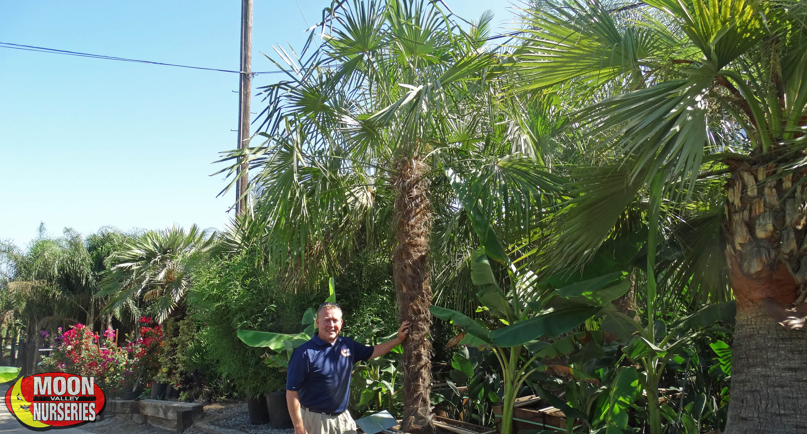 blog_main_pic_top_5_palms_tx