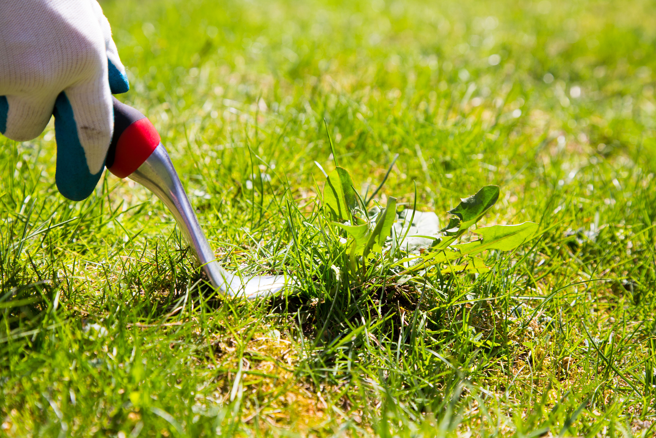 pre-emergent_herbicides_bye_bye_weeds