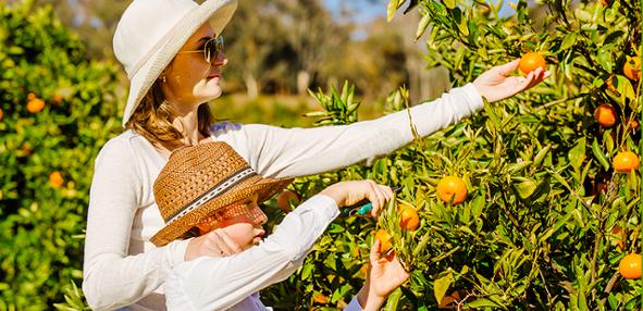 family_picking_oranges_.png
