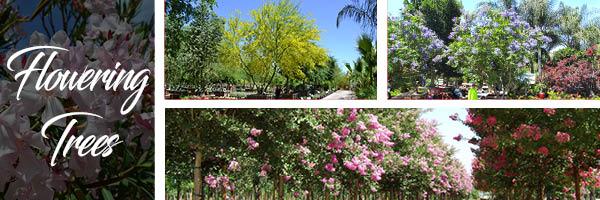flowering-ca