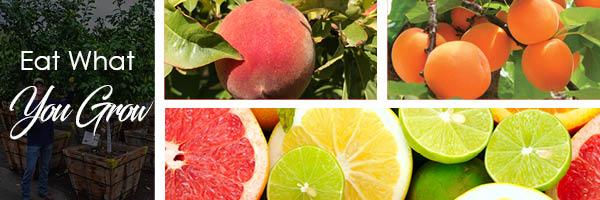 fruit-tx