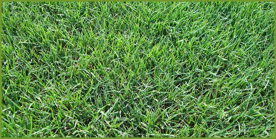 reseed_for_winter_lawn