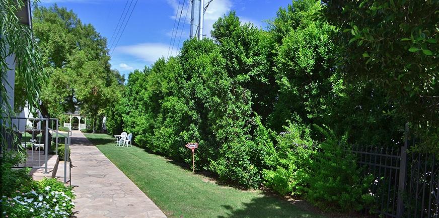 Landmark wedding venue after hedge planting