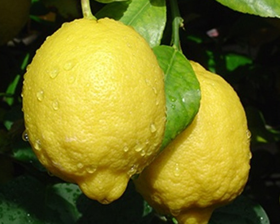 lemon-4.png