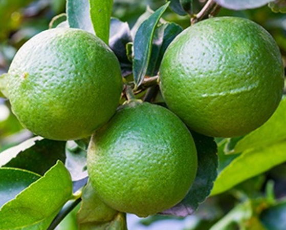 limes.png