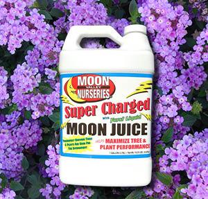 moon juice shrubs