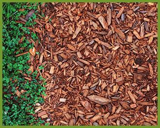 mulching_winter_lawn_grass