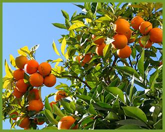 oranges-3.png