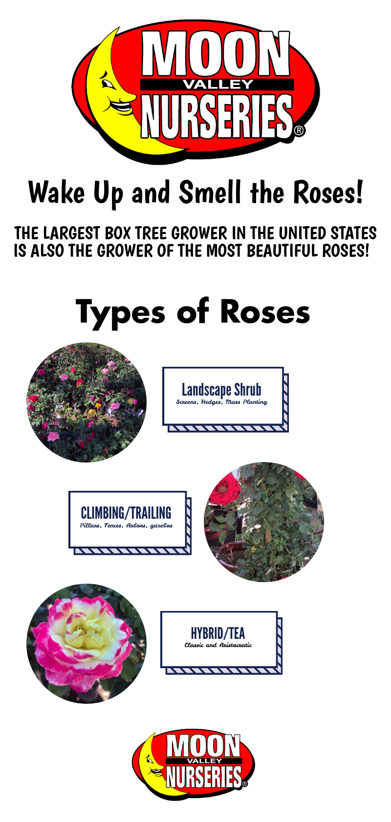 roses_infographic.png