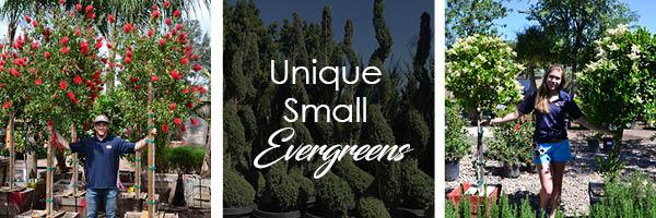 small unique hedges