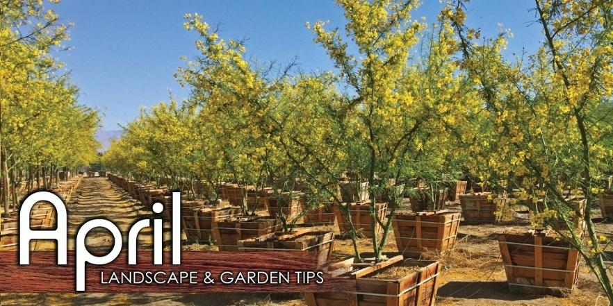 April_Landscape_Garden_Tip-1