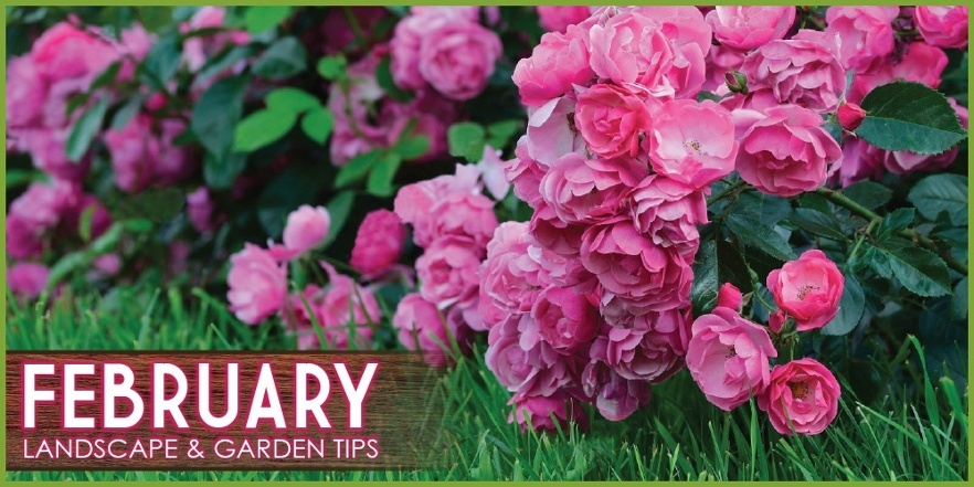Landscape_and_garden_tips_february