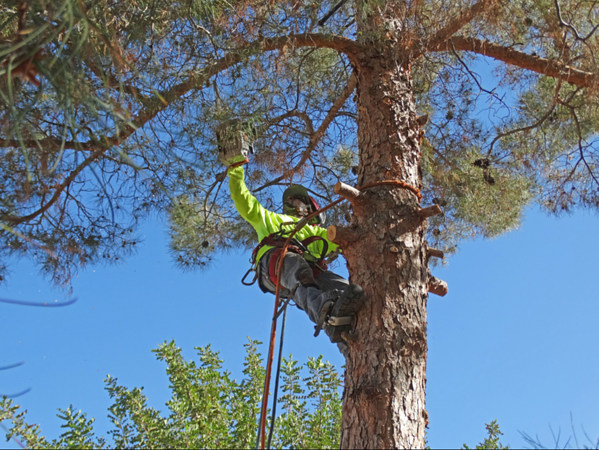 Tree Trimming #3