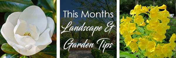 texas-landscape-tips