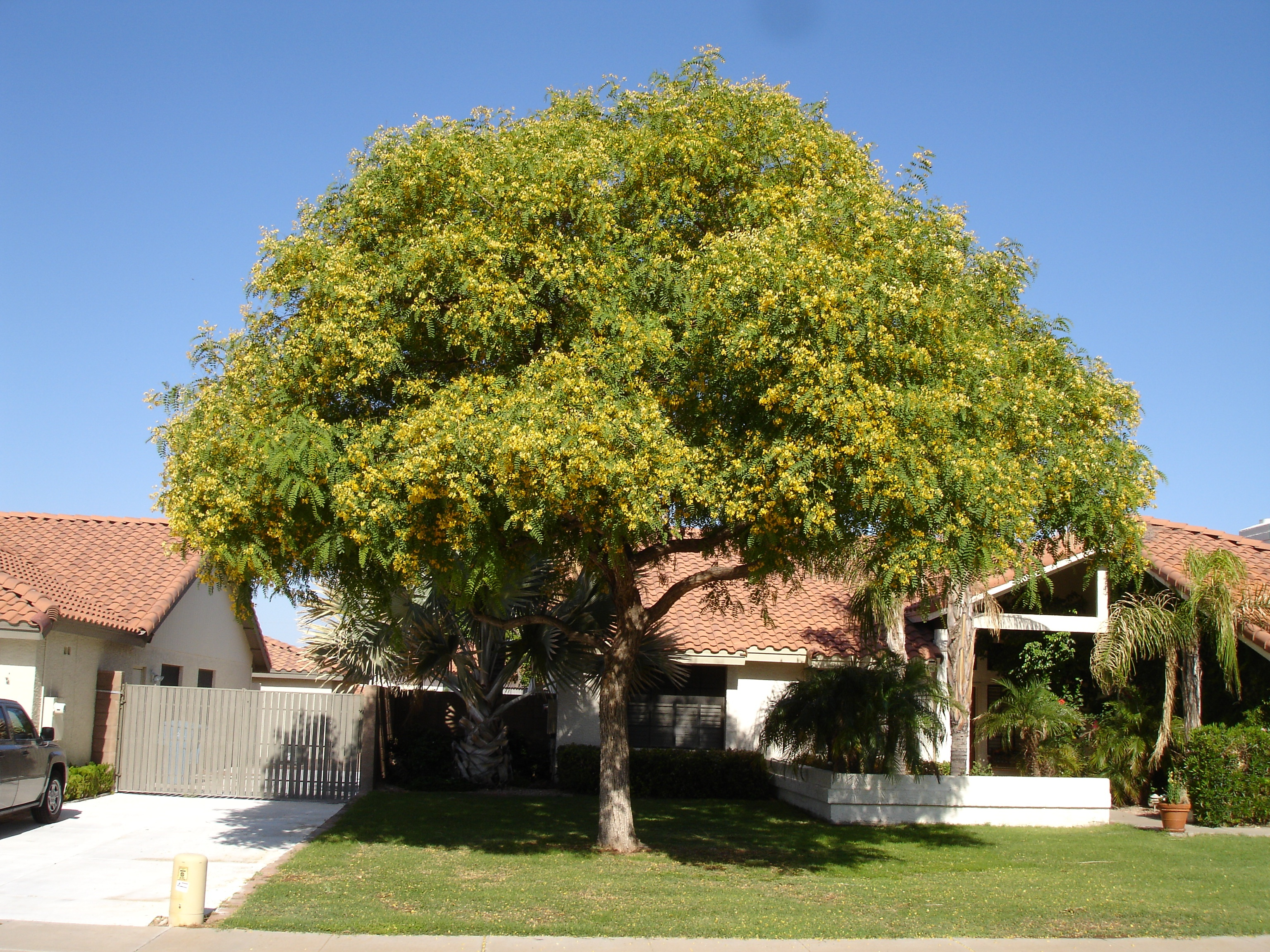 tipu_tree