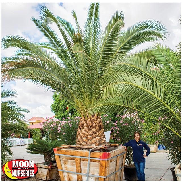 landing page pineapple palm 4