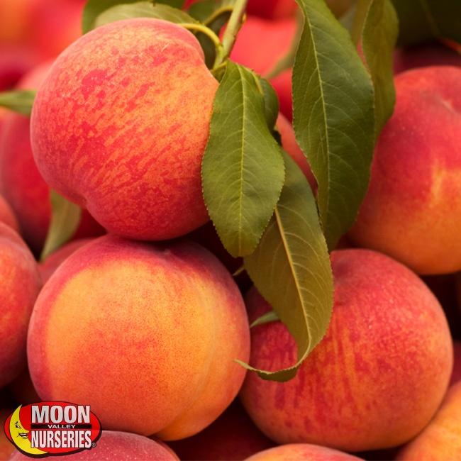 650x650-Peaches